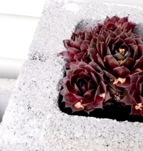 succulents_planter